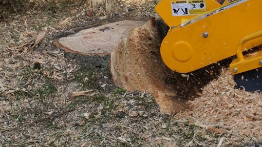 Baumstumpf mit Wurzelfräse (Stubbenfräse) entfernen